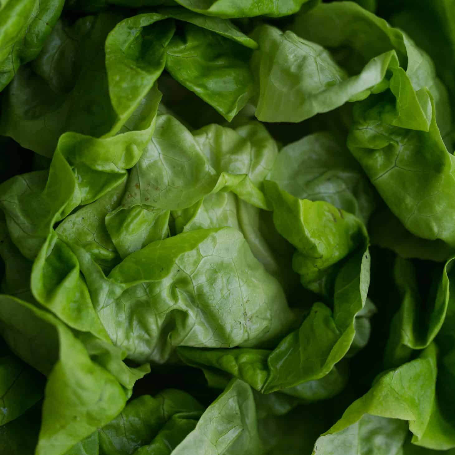 Lettuce - Explore an Ingredient - Naturally Ella