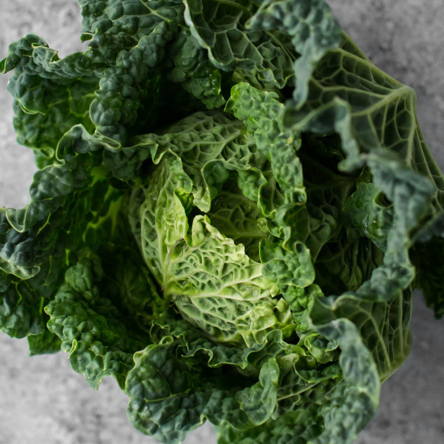 Cabbage- Explore an Ingredient