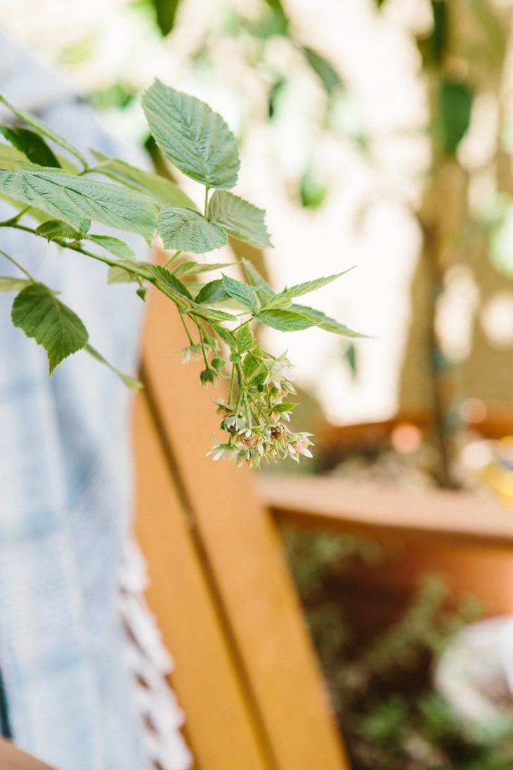 Raspberries | Patio Container Garden