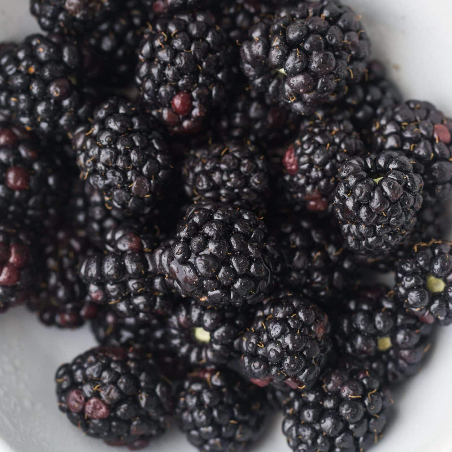 Blackberries | Explore an Ingredient