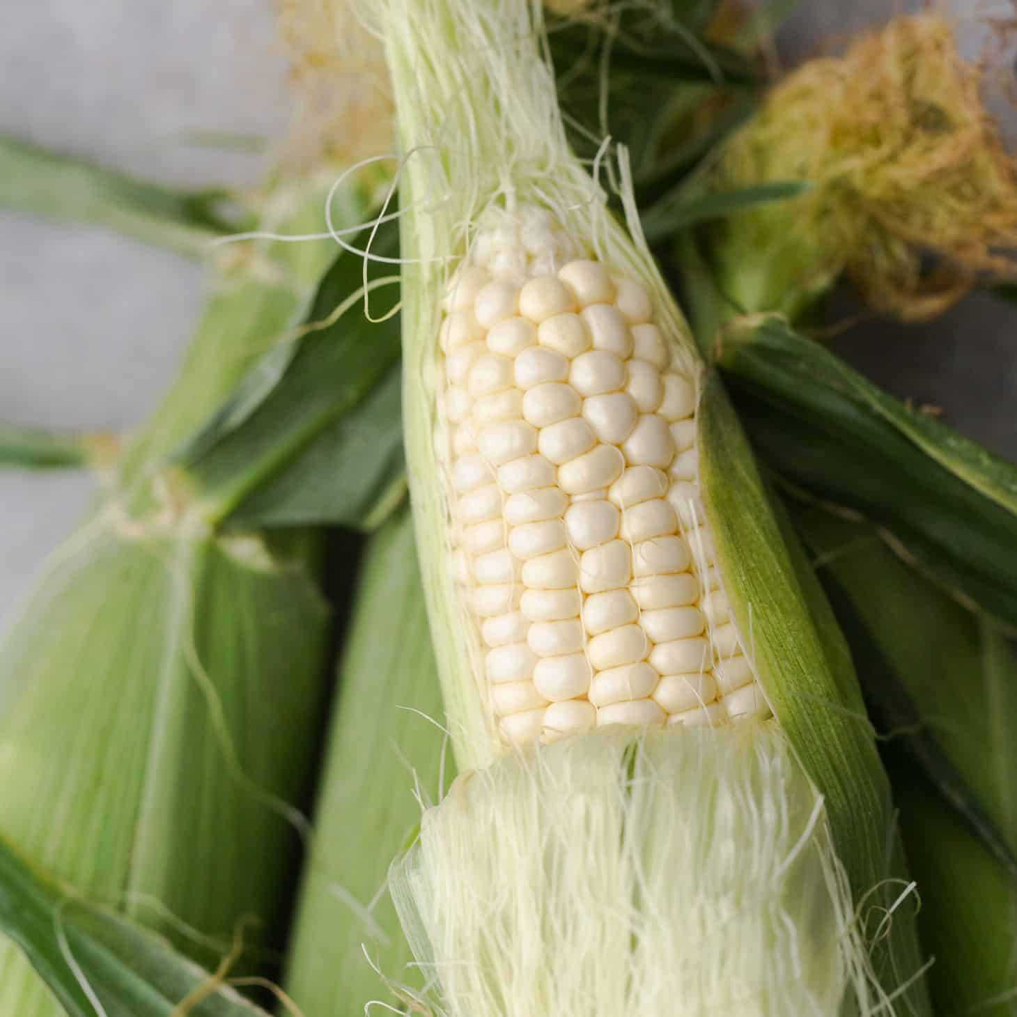 Sweet Corn | Explore an Ingredient