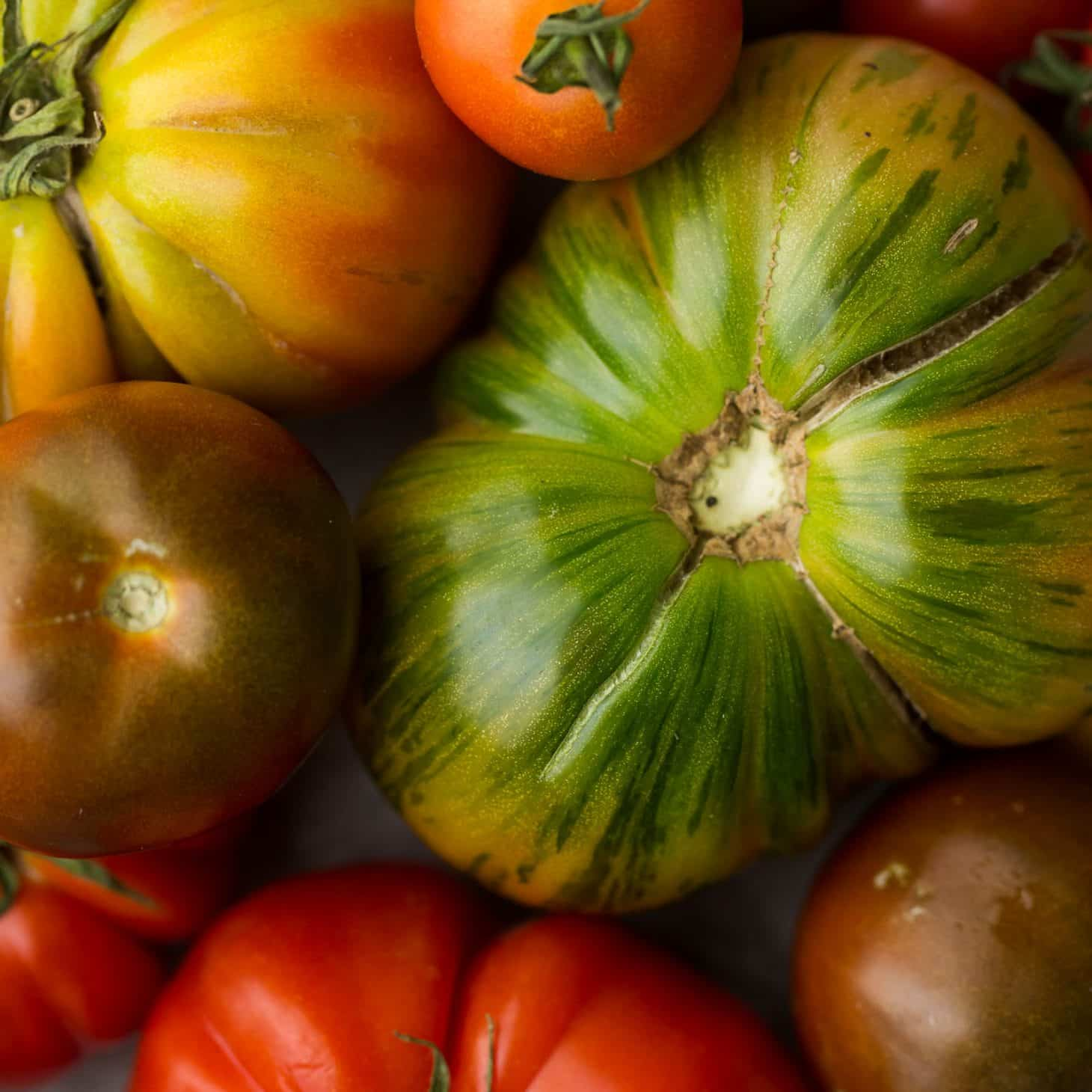 Tomatoes | Explore an Ingredient