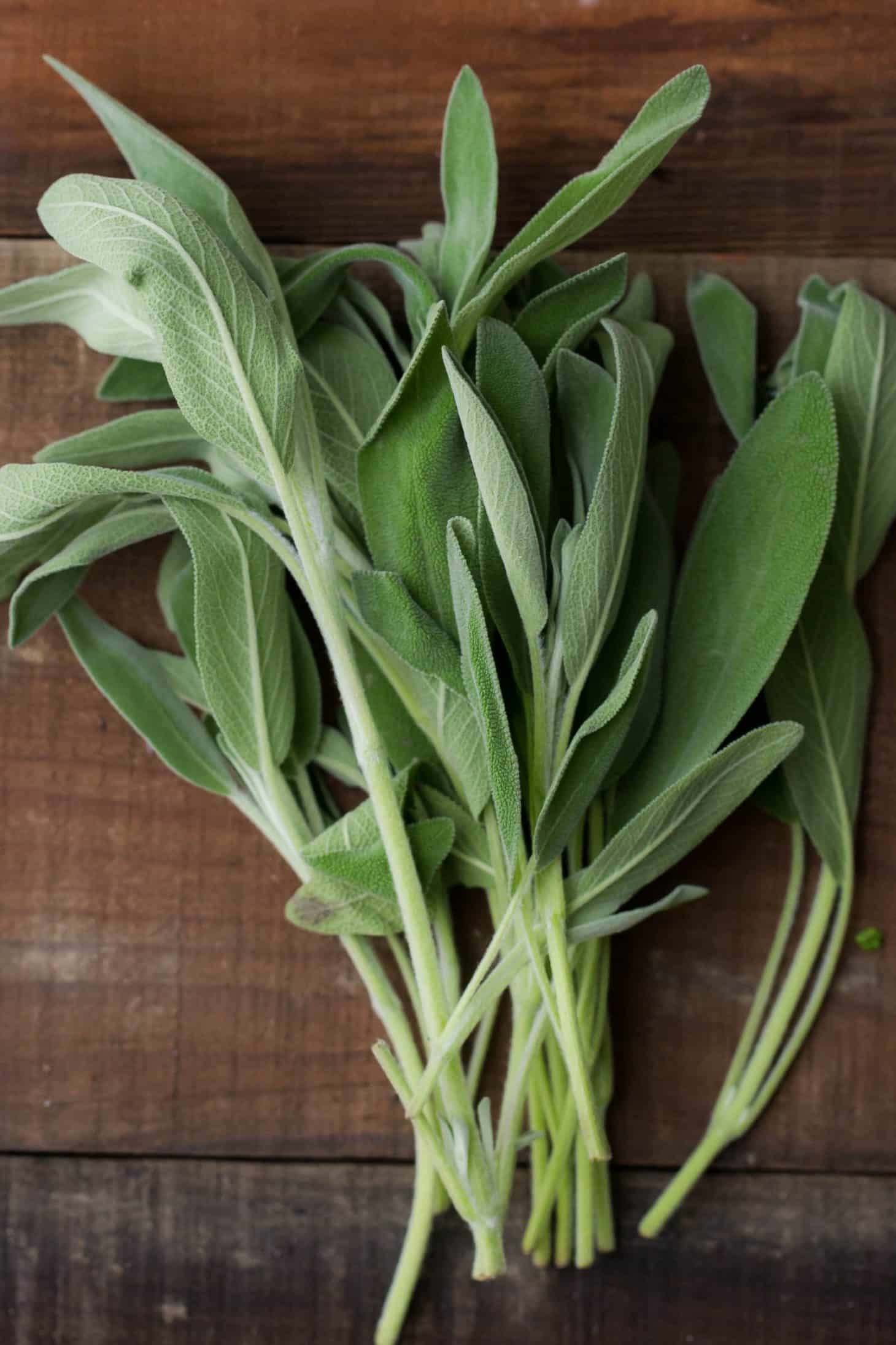 Sage - Herbs - Stock a Pantry