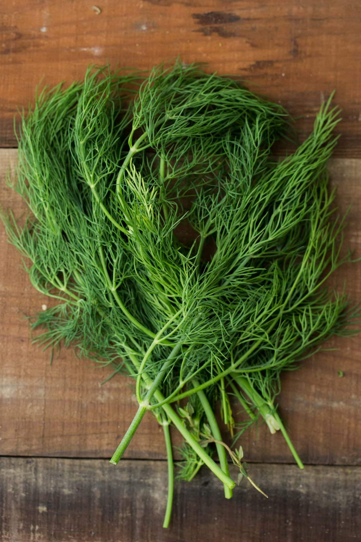 Dill - Herbs - Stock a Pantry