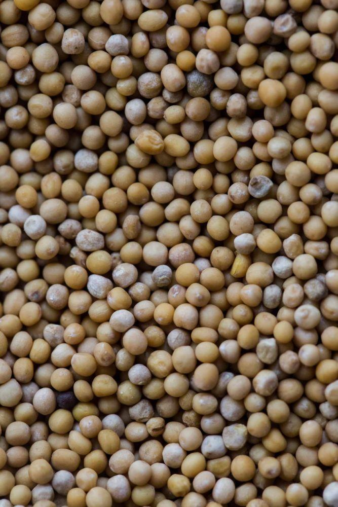 Mustard Seeds   Spices- Stock a Pantry   Naturally Ella
