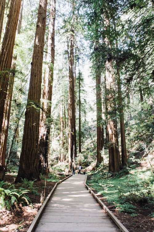 Favorite Snacks + Muir Woods