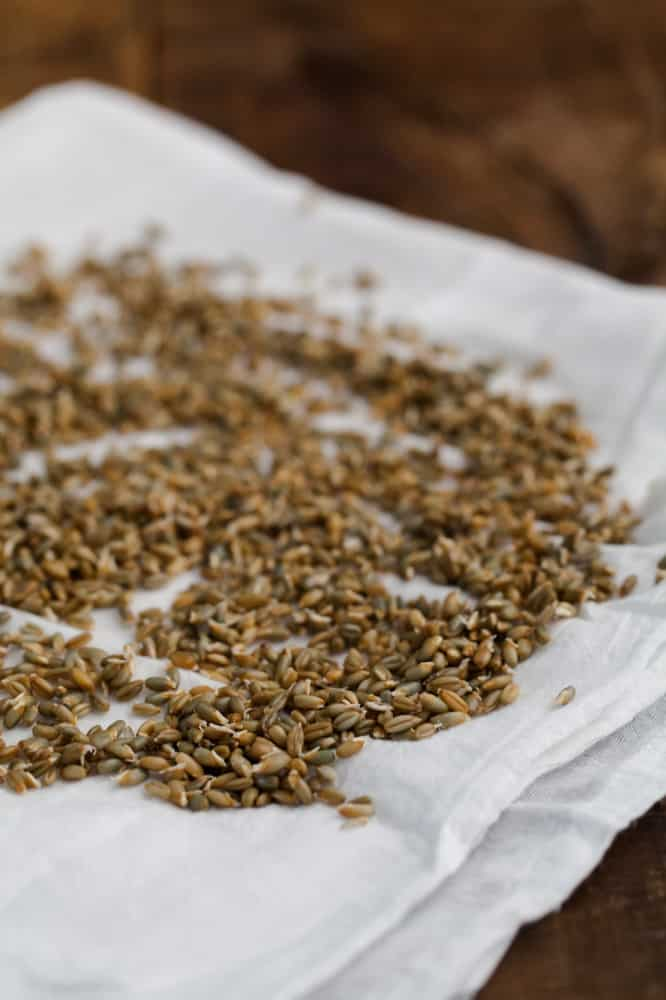 Sprouted Rye | @naturallyella