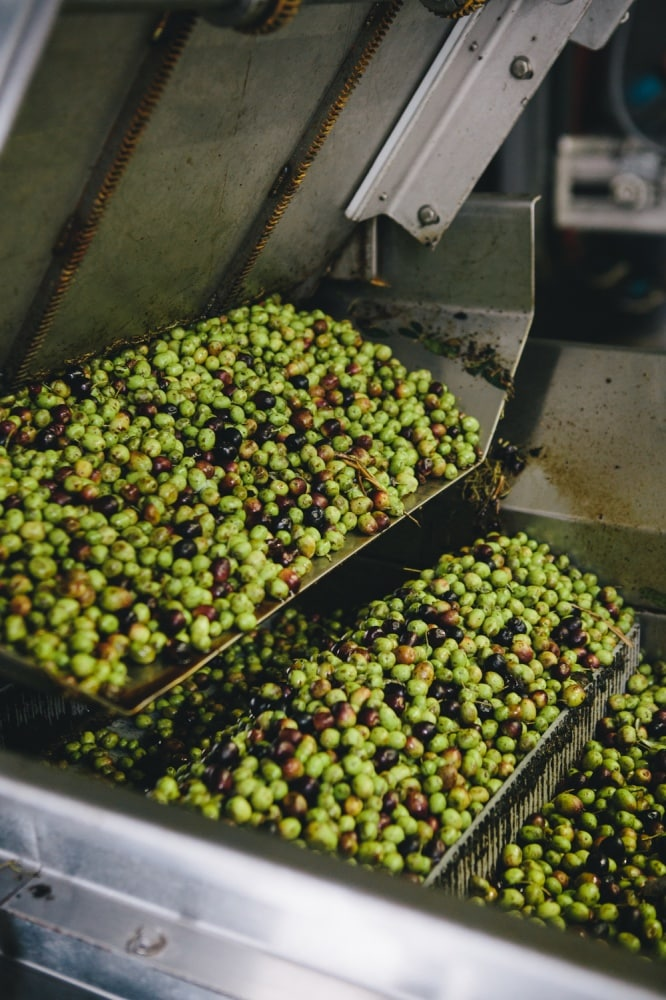 California Olive Ranch Olive Oil Process | @naturallyella