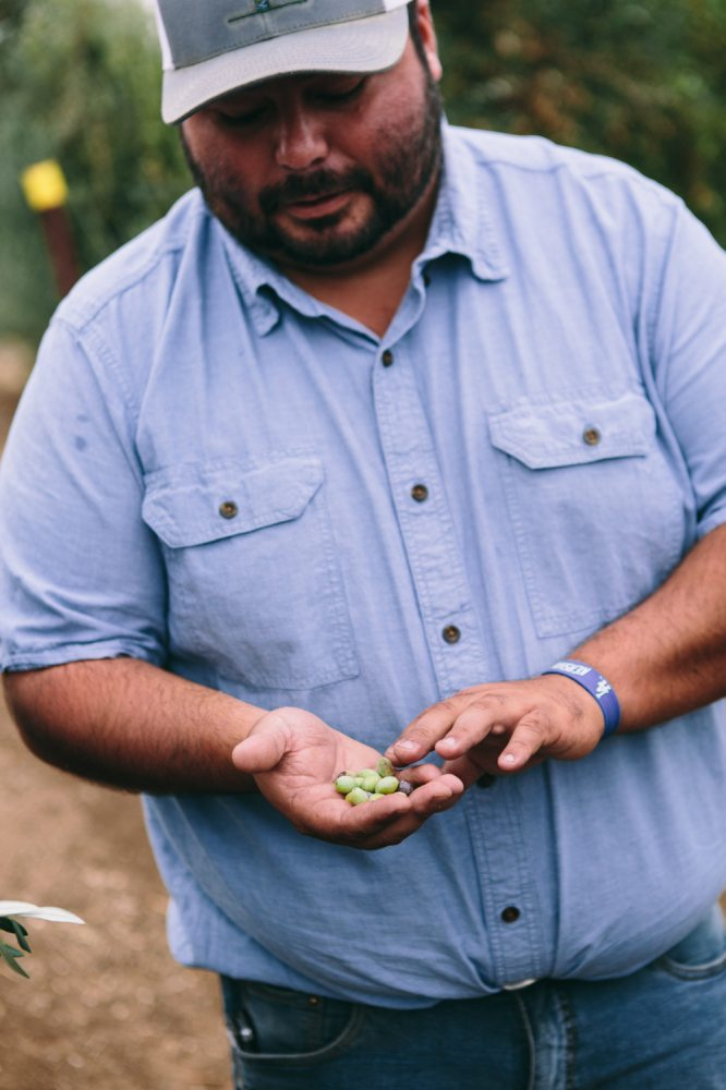 California Olive Ranch Tour in Northern California