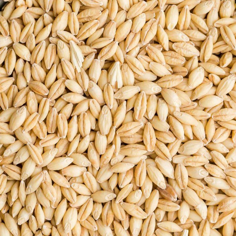 Barley | Grains | Stock a Pantry
