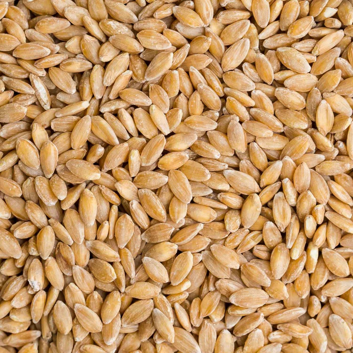 Einkorn Recipes Storage And Cooking Tips Naturally Ella