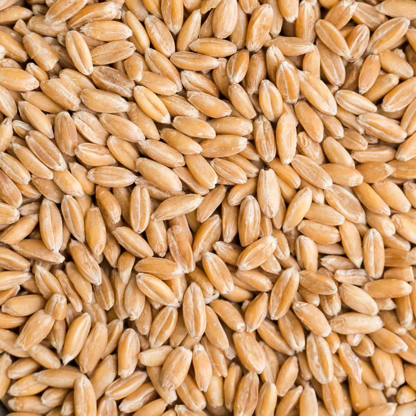 Spelt Recipes Storage And Cooking Tips Naturally Ella