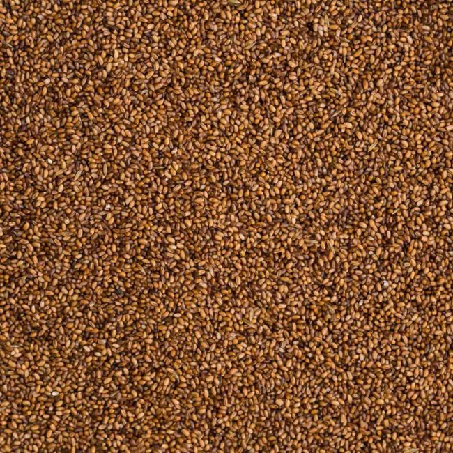 Teff | Grains | Stock a Pantry