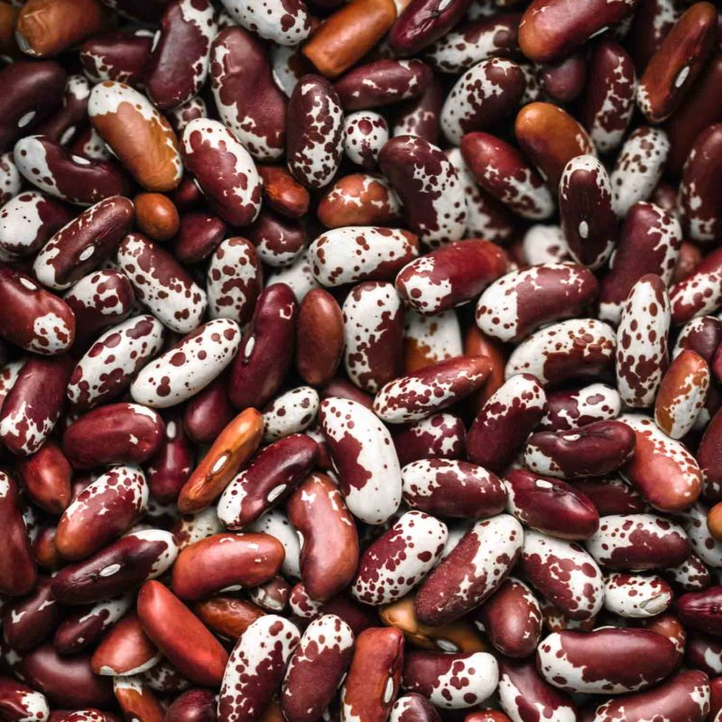 Jacob's Cattle Beans