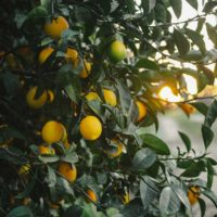 Saving the season: Lemons