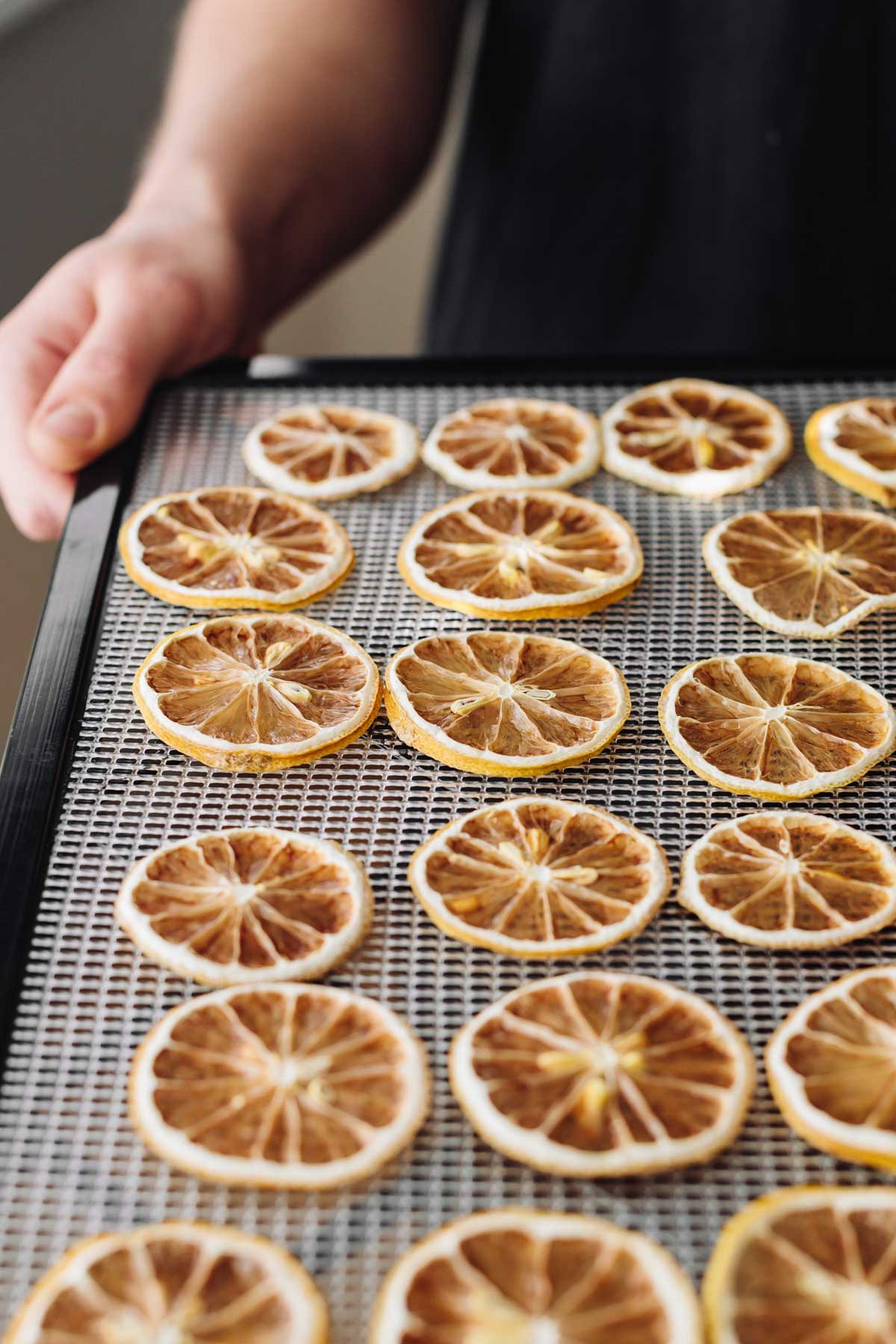 Side-angle photograph of a dozen dried lemon slices.