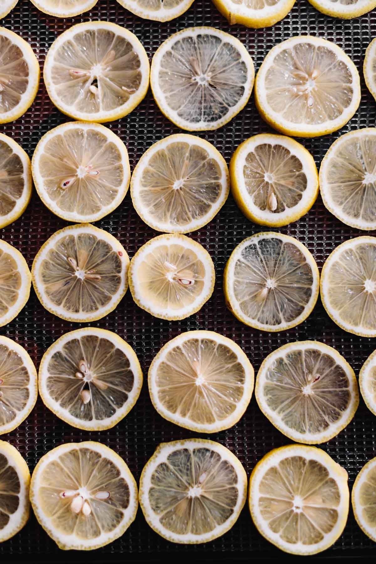 Overhead photo of sliced lemons, ready for drying.
